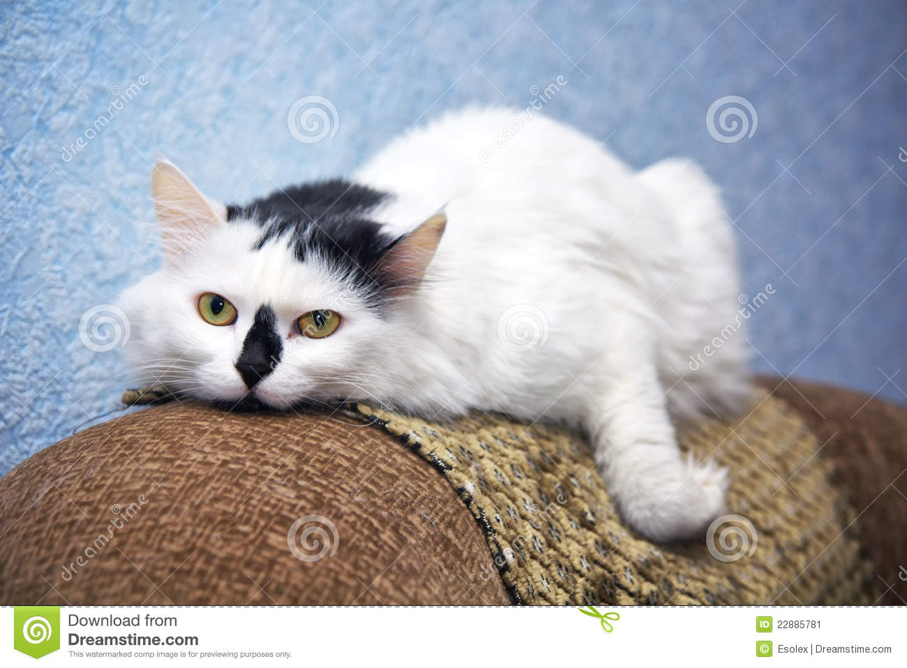 best sofa for cats owners ashley alenya 2 pc sectional laf loveseat raf blue eyes kitty on stock photo cartoondealer