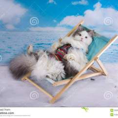 Predator Hunting Chair 1930 Platform Rocking Cat In A Swimsuit Sunbathe On The Beach Stock Photo - Image: 55002211