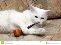 Cat With Tobacco-pipe Royalty Free Stock Image - Image ...