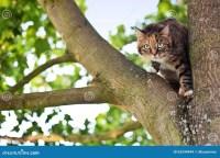 Cat On A Tree Stock Photo - Image: 53244944