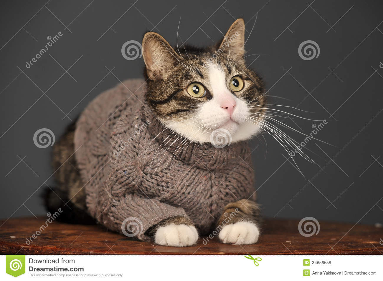 Cat Wearing A Sweater Royalty Free Stock Photos  Image