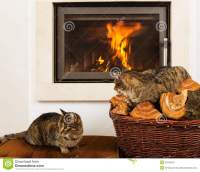 Cats In Front Of Fireplace stock image. Image of interior ...