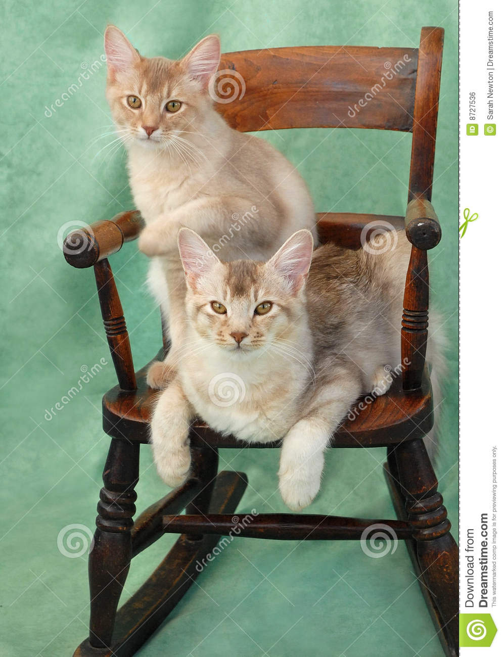 Cats on rocking chair stock photo Image of feline