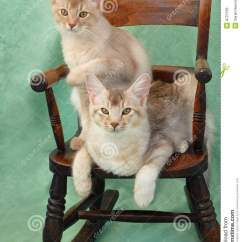 Green Rocking Chair Whale Spa Pedicure Cats On Stock Photo. Image Of Feline, Relaxing - 8727536