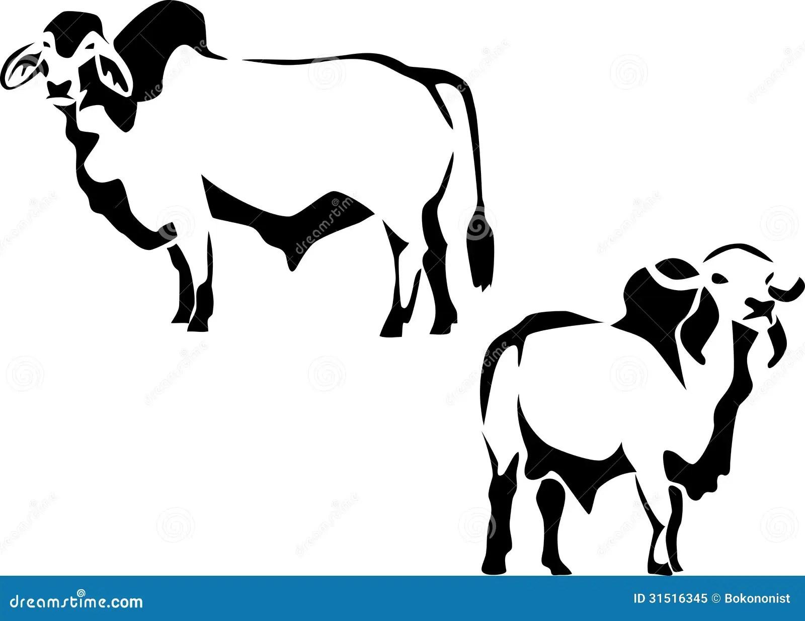 Cattle Stock Vector Illustration Of Beef Bull Farm