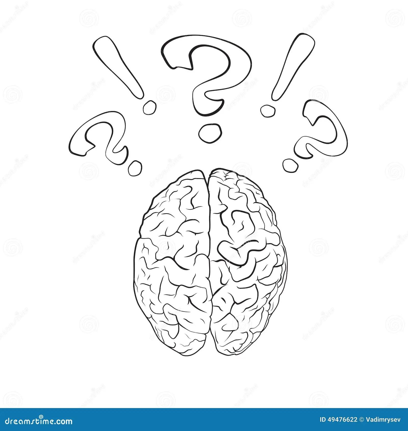 Cerveau Avec Le Point D Interrogation Et La Marque D