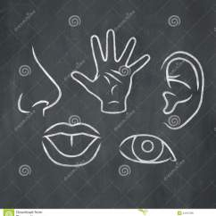Five Senses Diagram Direct Tv Chalk 5 Stock Illustration Image Of Anatomy Lips