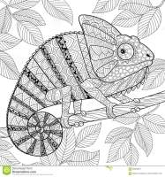 Chameleon In Zentangle Style. Adult Antistress Coloring ...