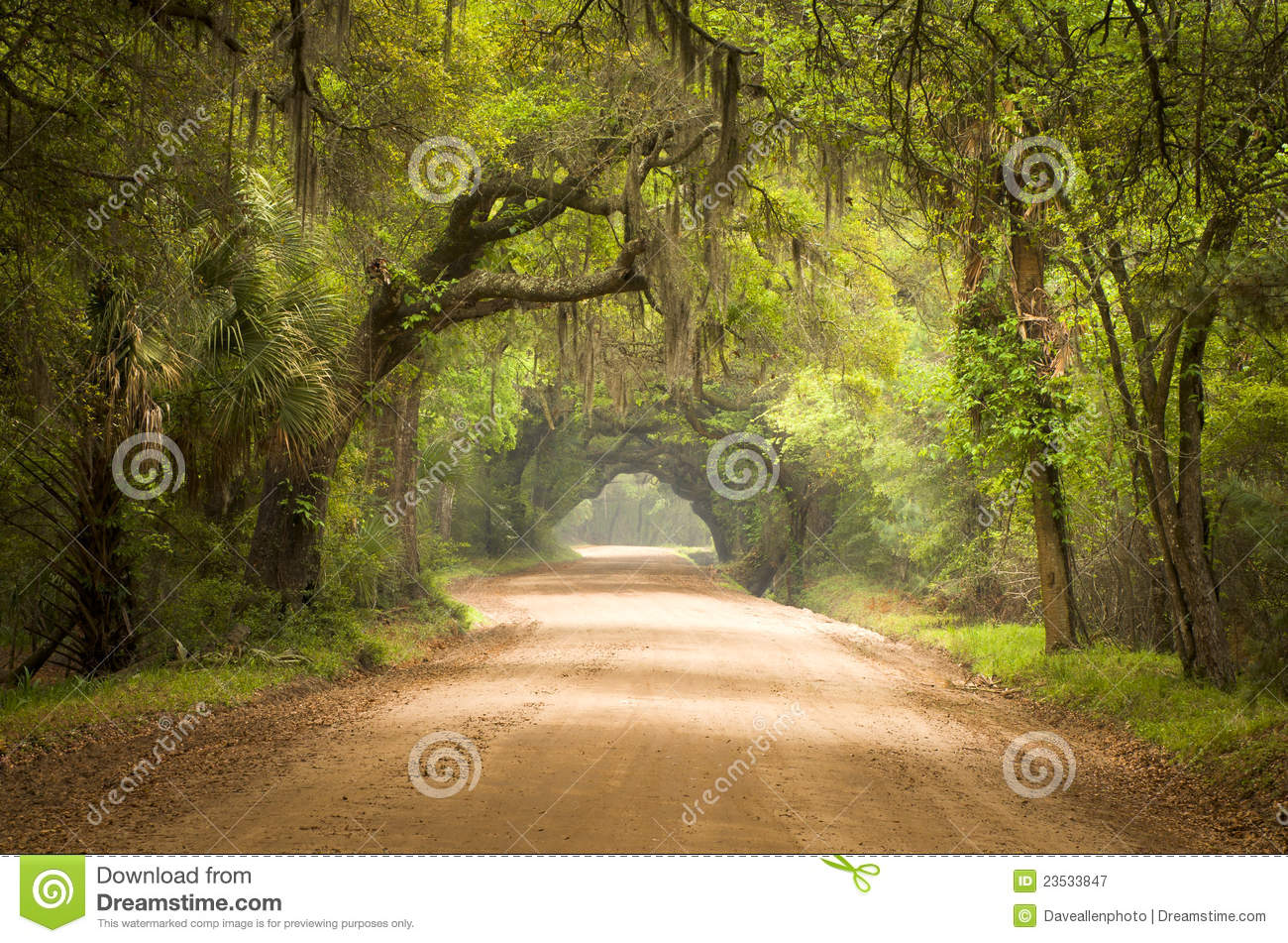 Vector Wallpaper Fall Colors Charleston Sc Dirt Road Forest Deep South Moss Stock Image