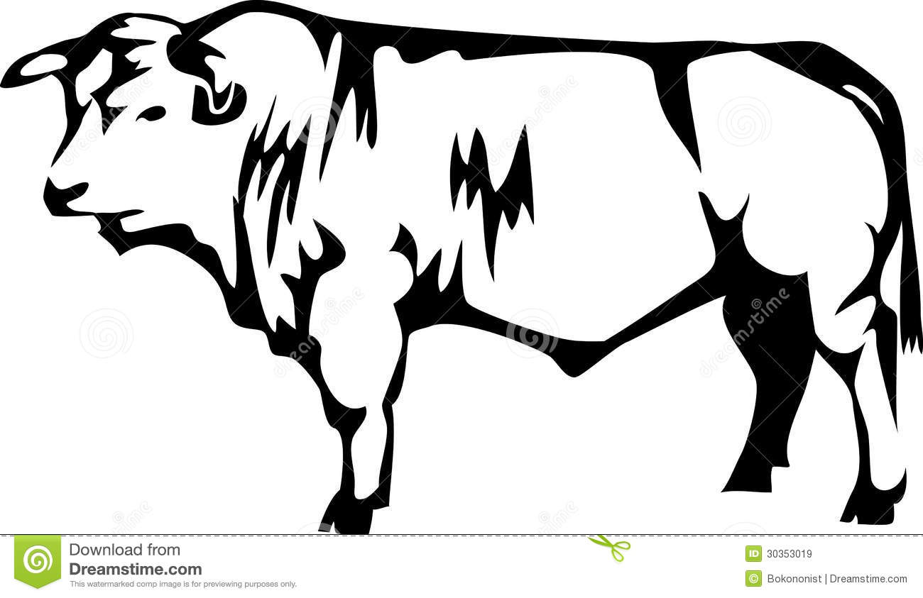 Charollais Stock Vector Illustration Of Livestock Cattle