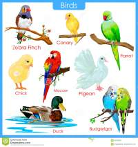Chart Of Colorful Birds Stock Vector