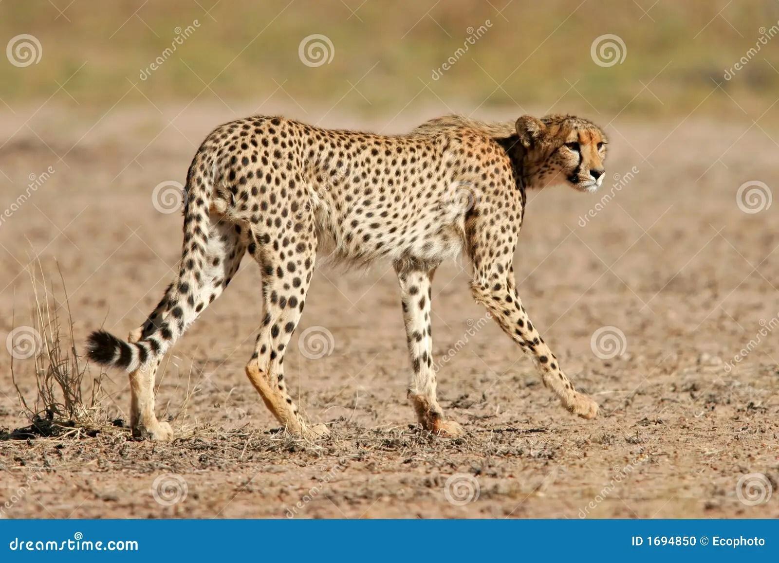 Desert Animal Print Pictures