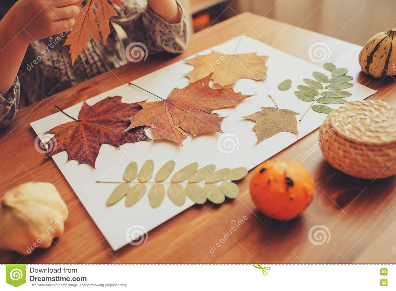The editors of publications international, ltd. Child Girl Making Herbarium From Dried Leaves At Home Nature Art And Craft Stock Photo Image Of Early Collage 71686088