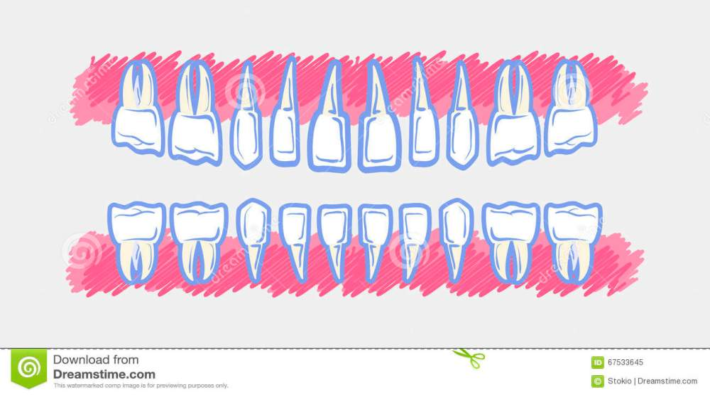 medium resolution of children teeth anatomy panoramic dental scan teeth child s upper and lower jaws of baby s skull