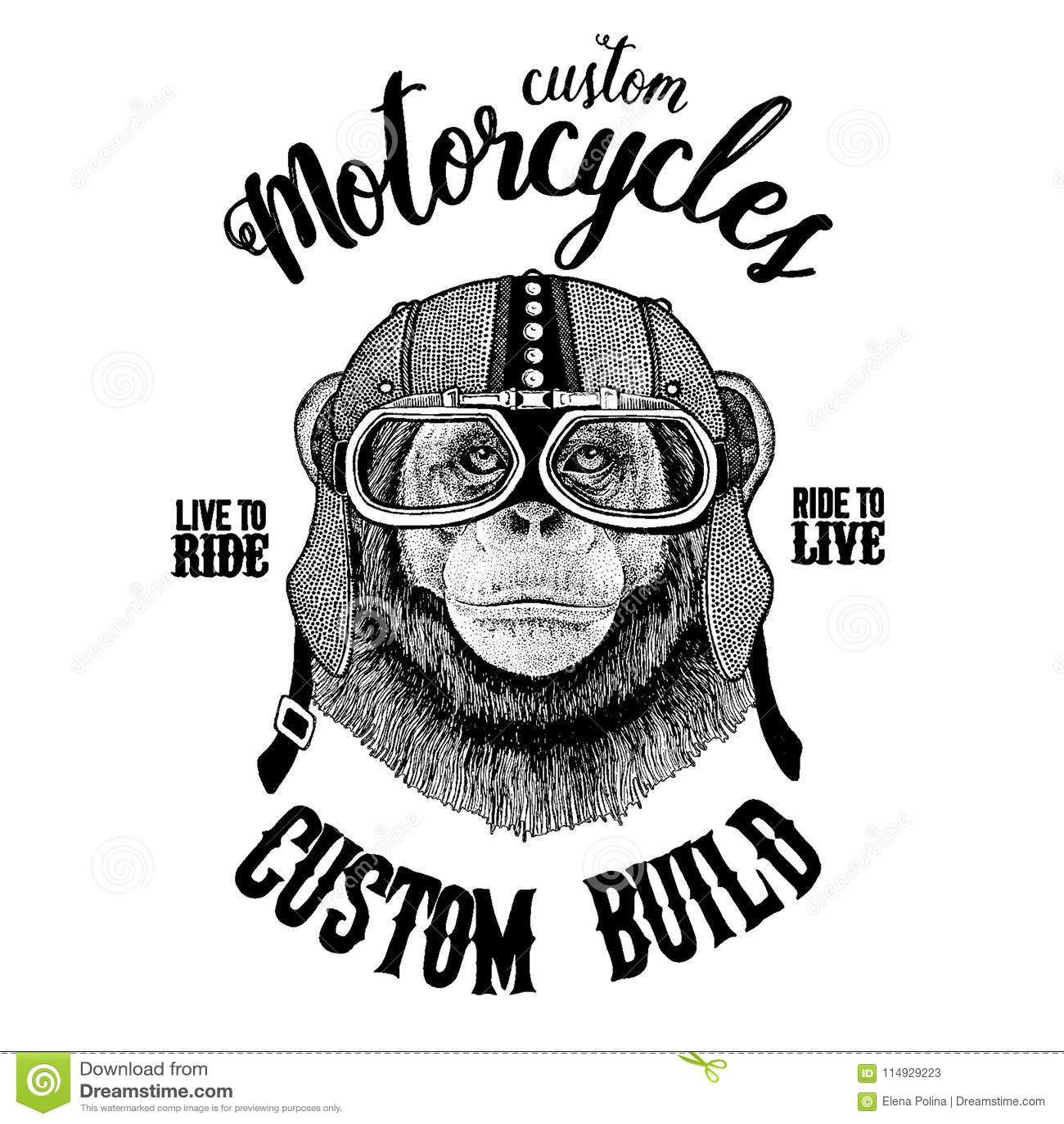Chimpanzee Monkey Biker Motorcycle Animal Hand Drawn