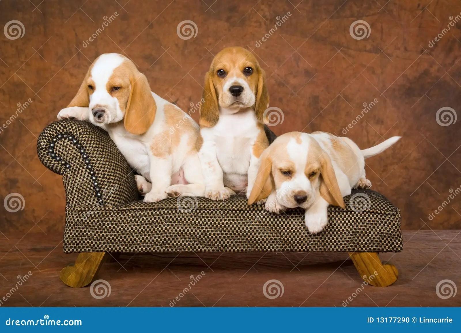miniature sofa sleeper sectional sale chiots mignons de briquet sur le photo stock - image ...