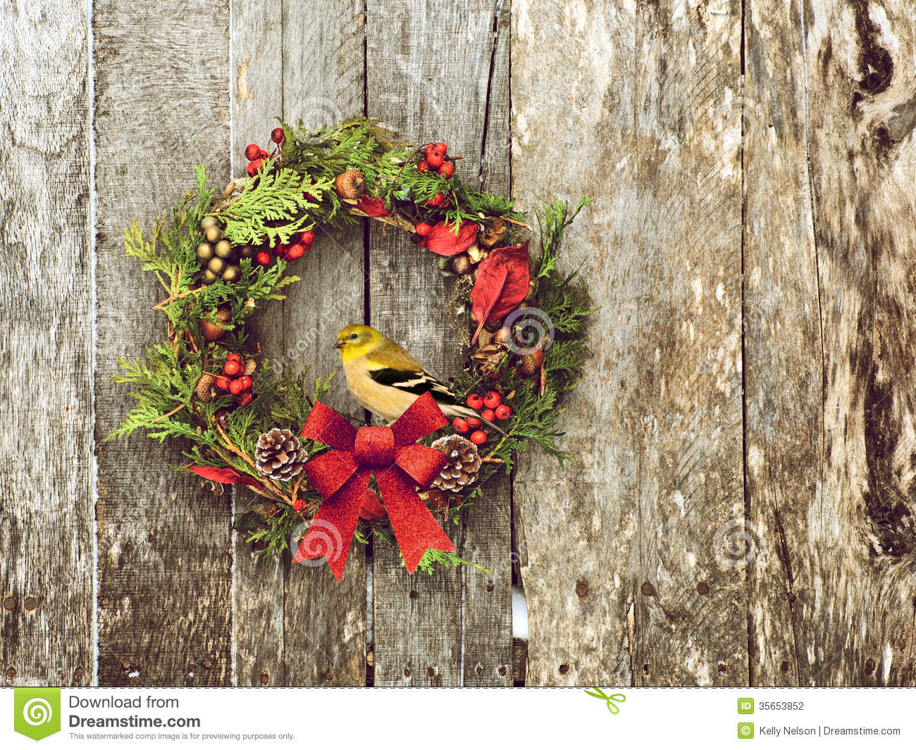 Christmas Bird Stock Photography Image 35653852