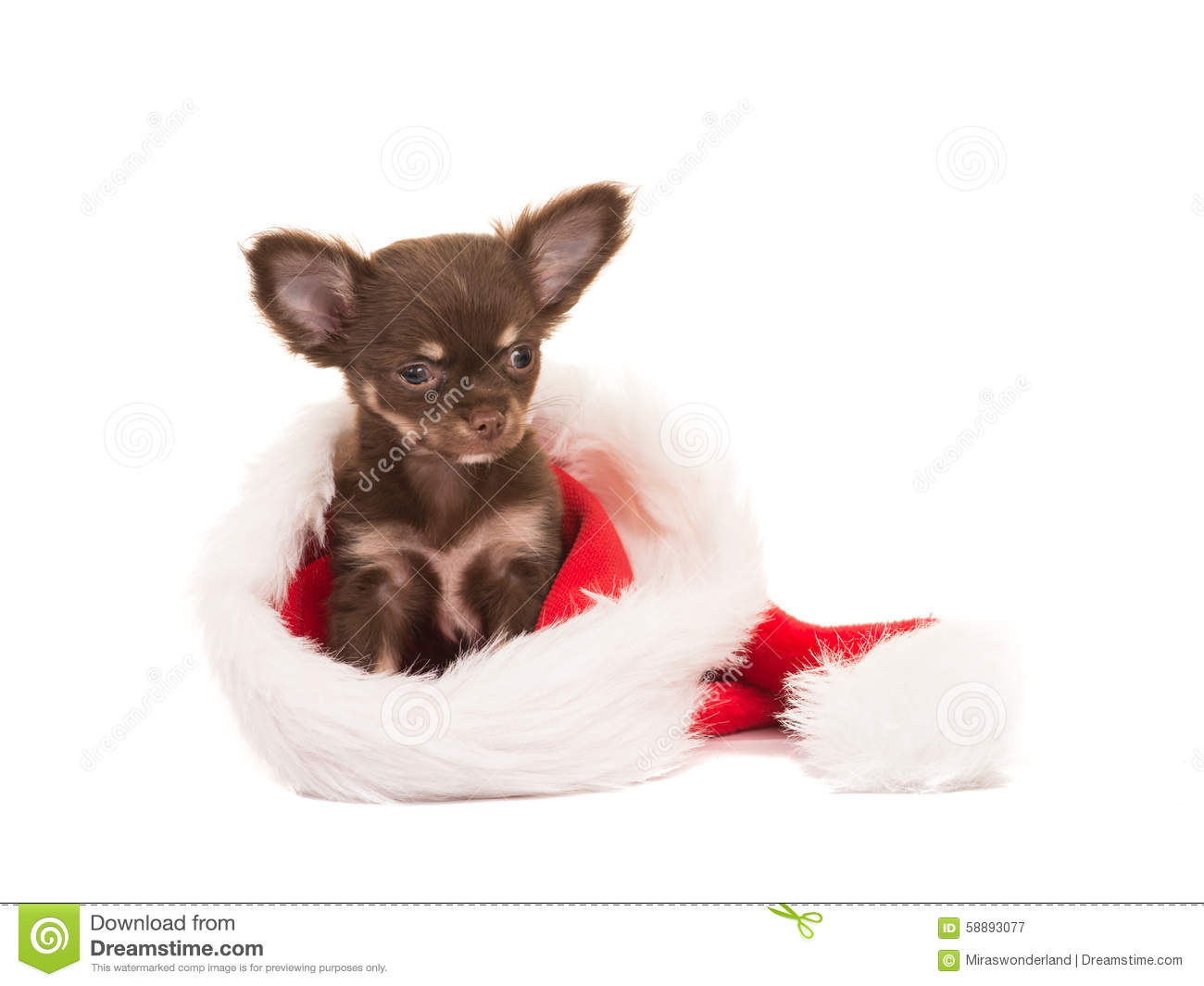 Christmas Card With Cute Chihuahua Puppy In Santas Hat