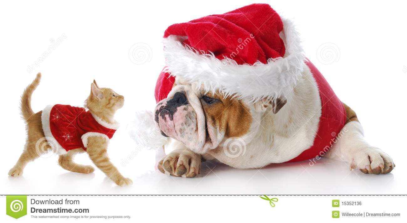 Christmas Cat And Dog Stock Photo Image Of Holiday Puppy