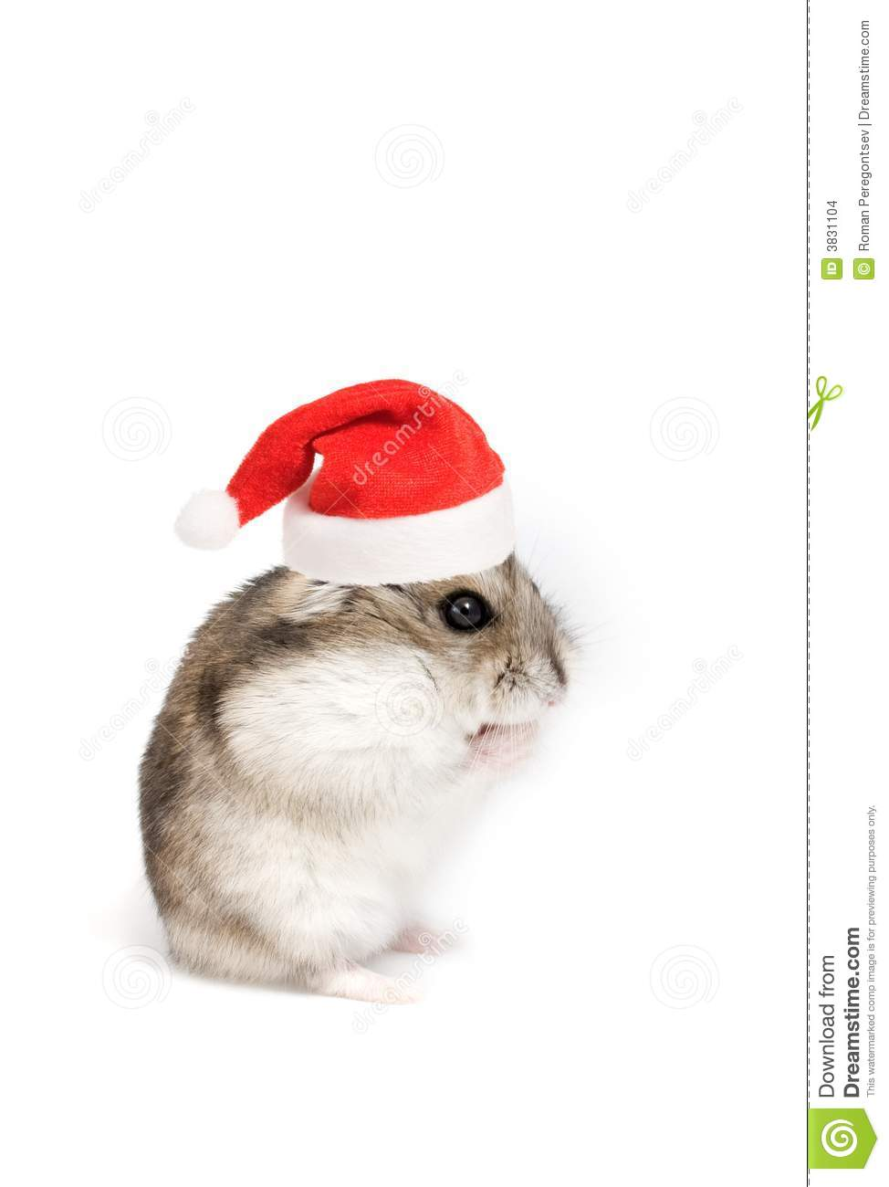 Christmas Hamster Stock Images Image 3831104