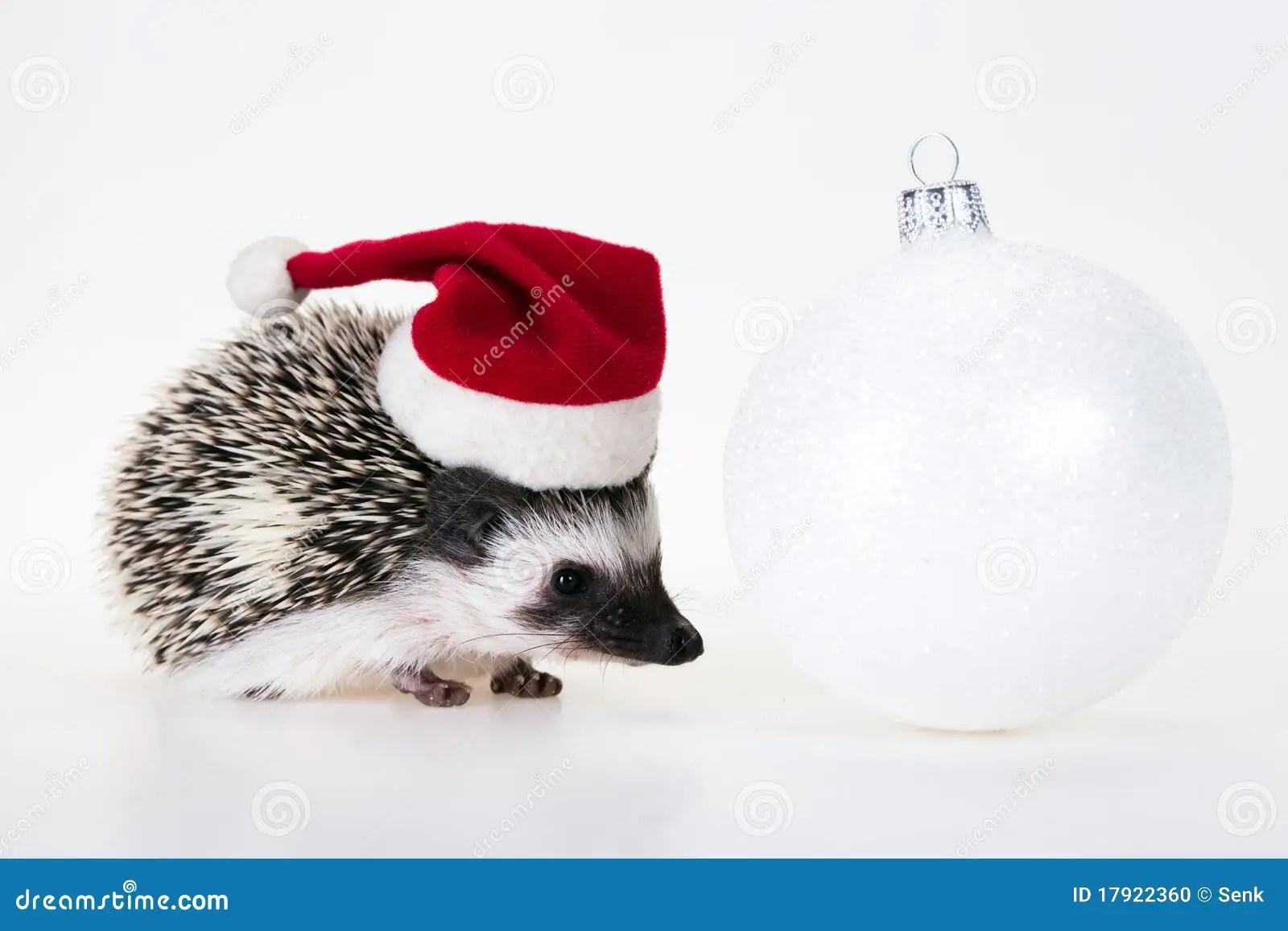 Christmas Hedgehog Stock Photo Image Of Beautiful Mammal
