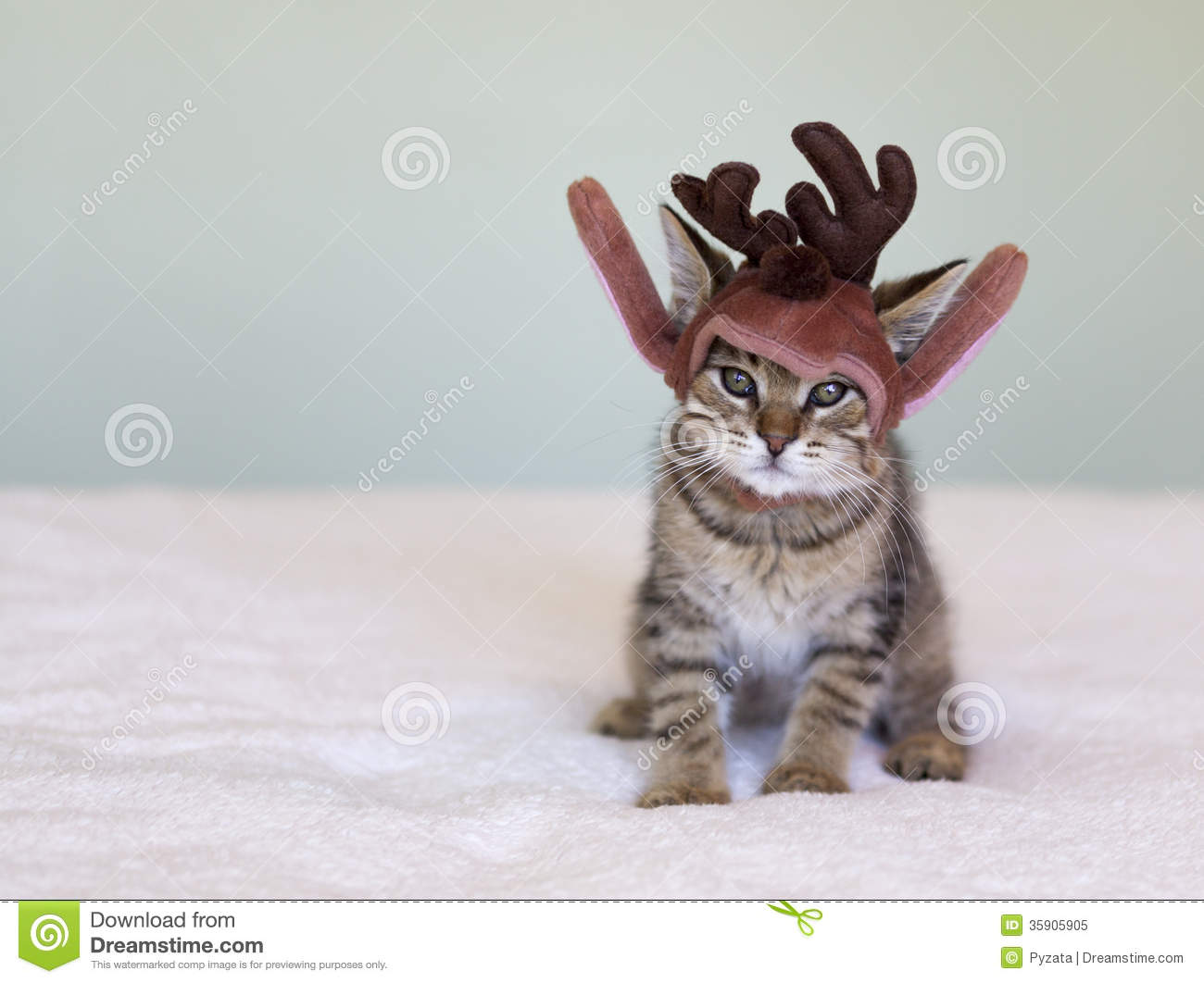 Christmas Kitten Stock Image Image Of Portrait Curious