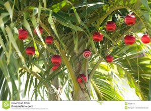 5 401 Christmas Palm Tree Photos Free Royalty Free Stock Photos From Dreamstime