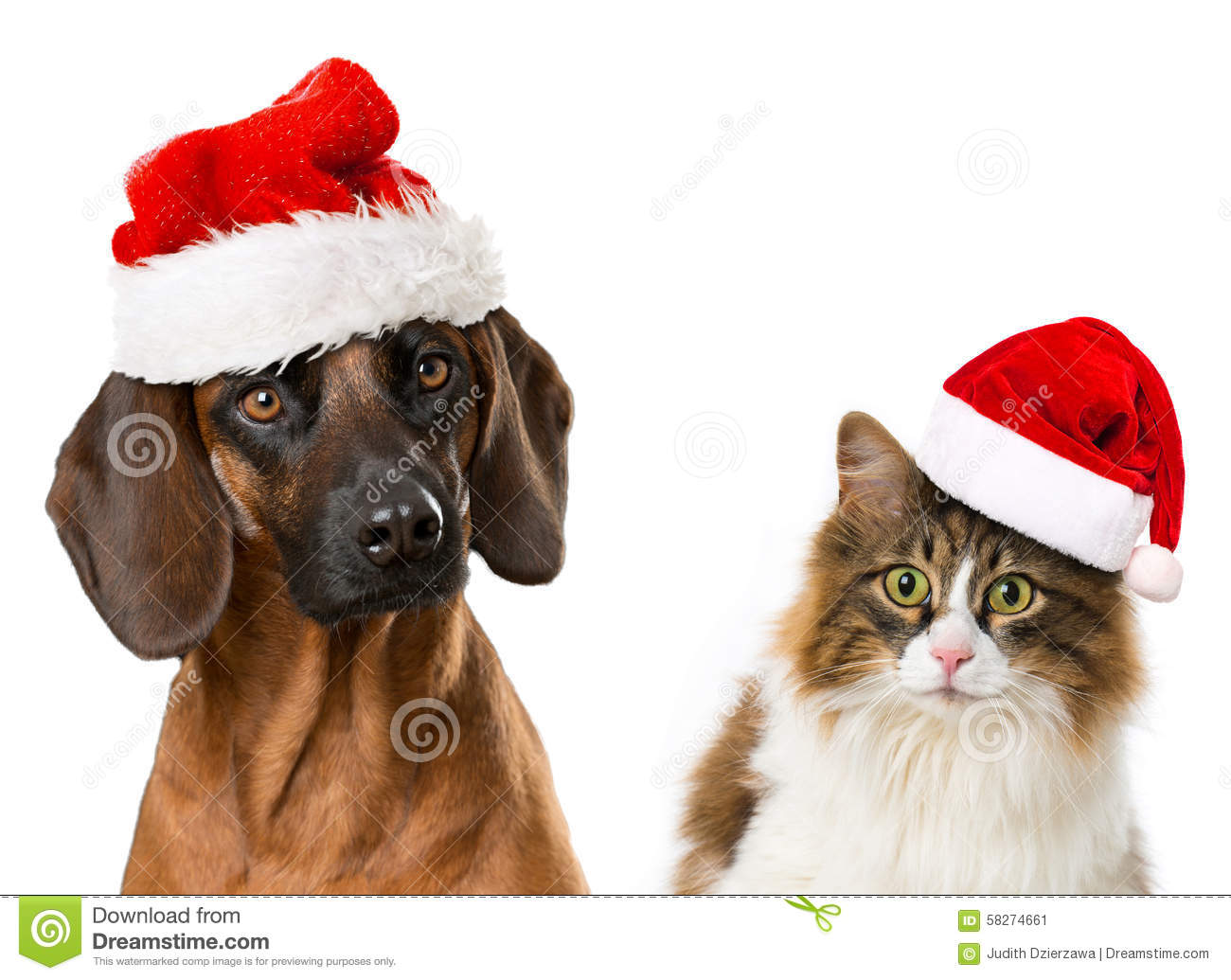 Christmas Pets Stock Photo Image 58274661