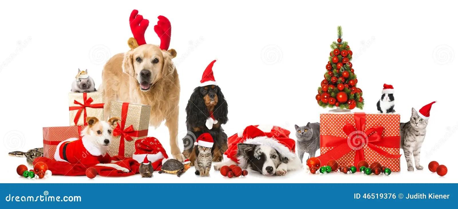 Christmas Pets Stock Photo Image 46519376
