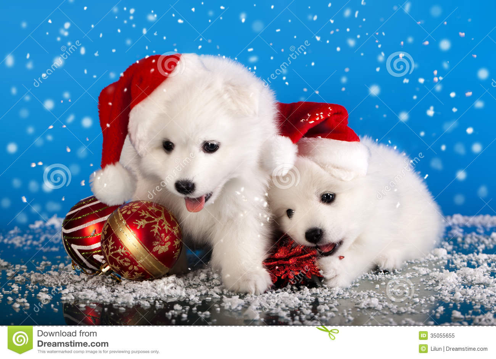 Christmas Puppies Spitz Stock Image Image Of Christmas