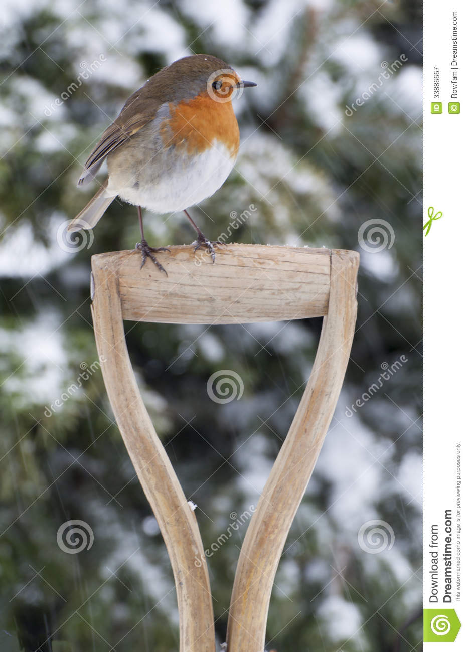 Christmas Robin In The Snow Royalty Free Stock Photography