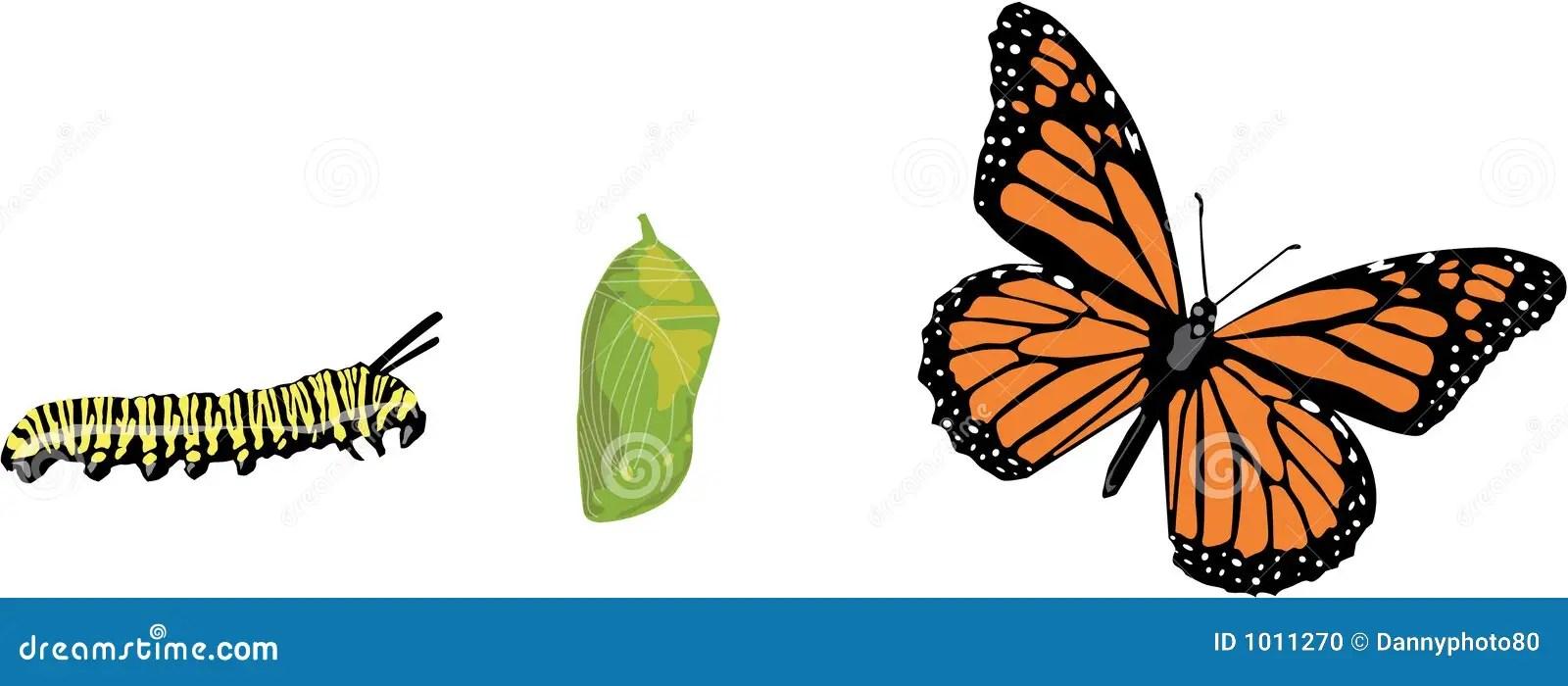 https://i0.wp.com/thumbs.dreamstime.com/z/ciclo-vital-de-la-mariposa-1011270.jpg