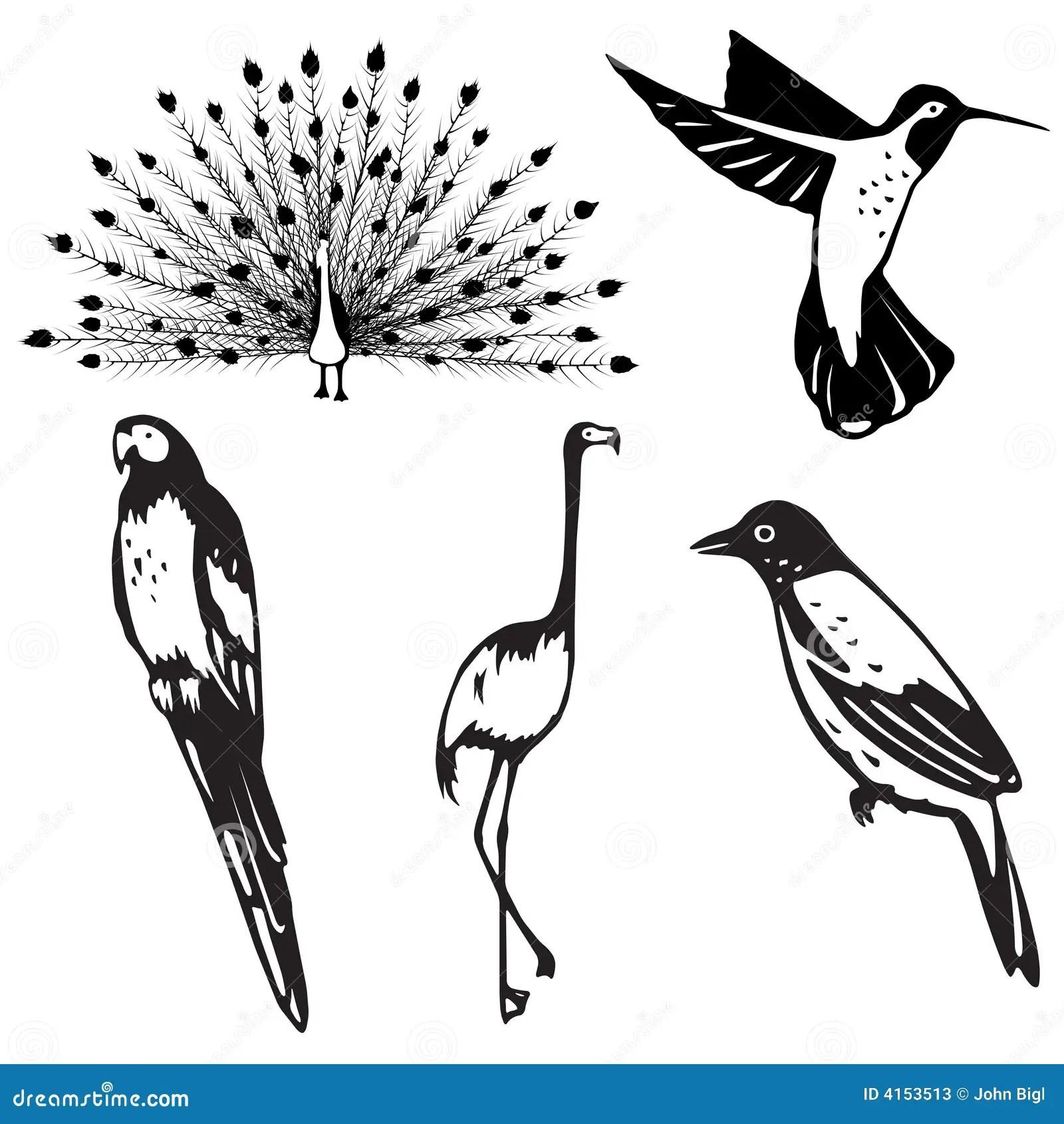 Cinco Ilustracoes Estilizados Do Passaro Ilustracao Do