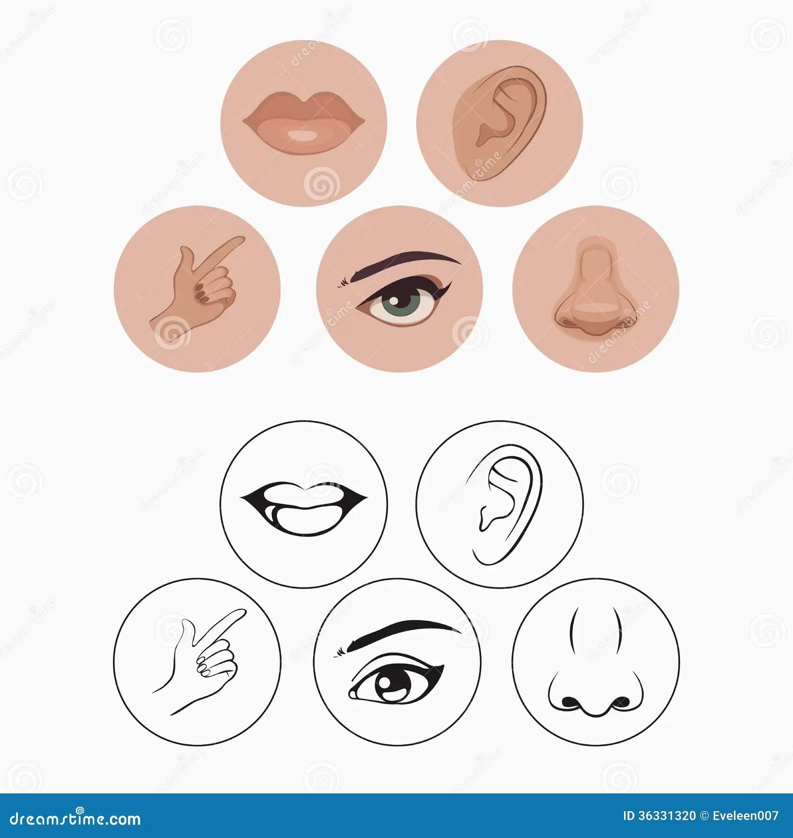 Cinq Sens Illustration De Vecteur Illustration Du