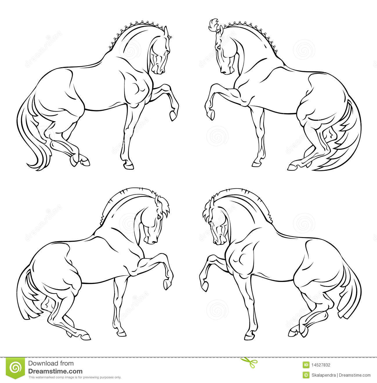 Horse Circus Breed Vector Vector Illustration