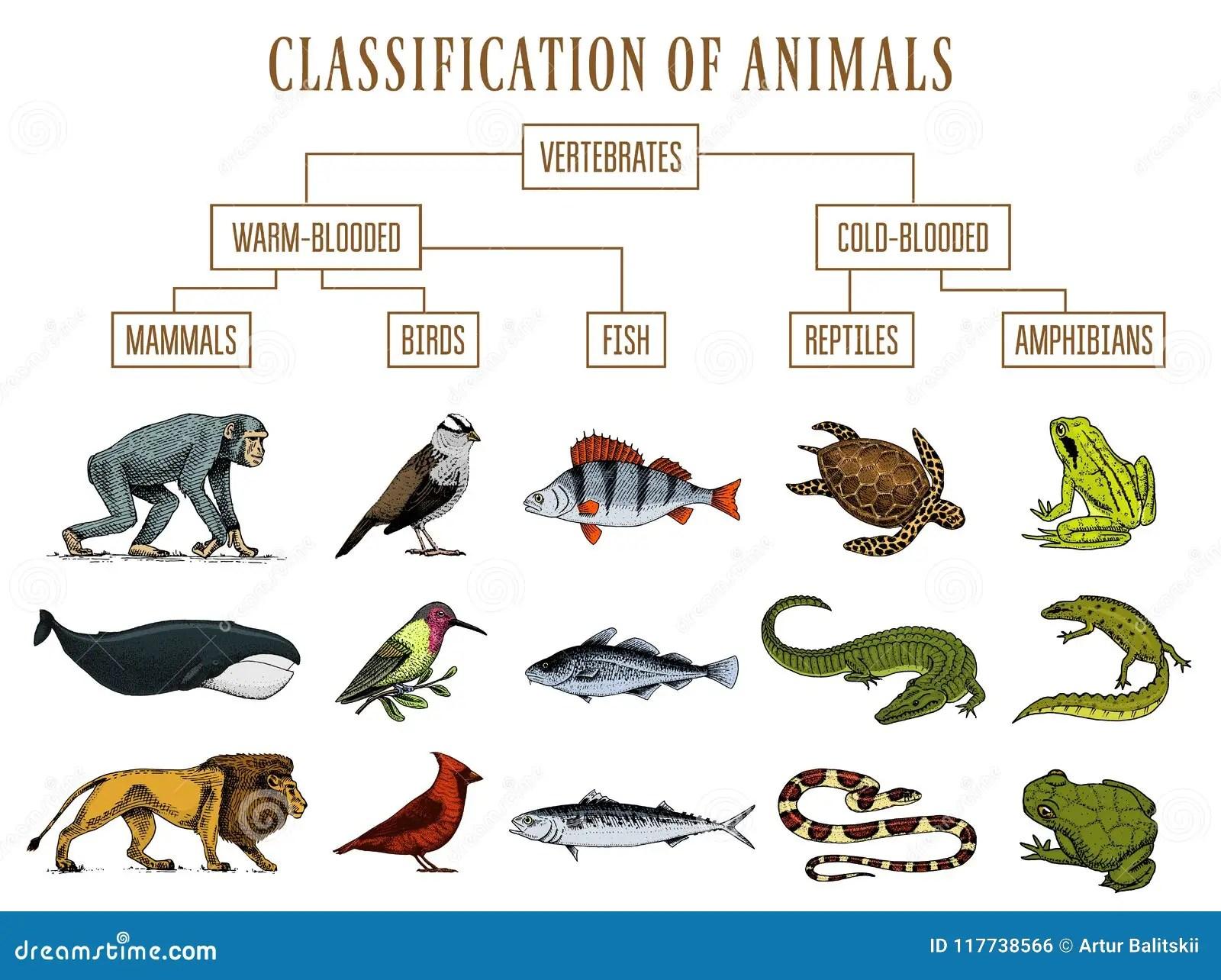 Classificacao Dos Animais Passaros Dos Mamiferos Dos