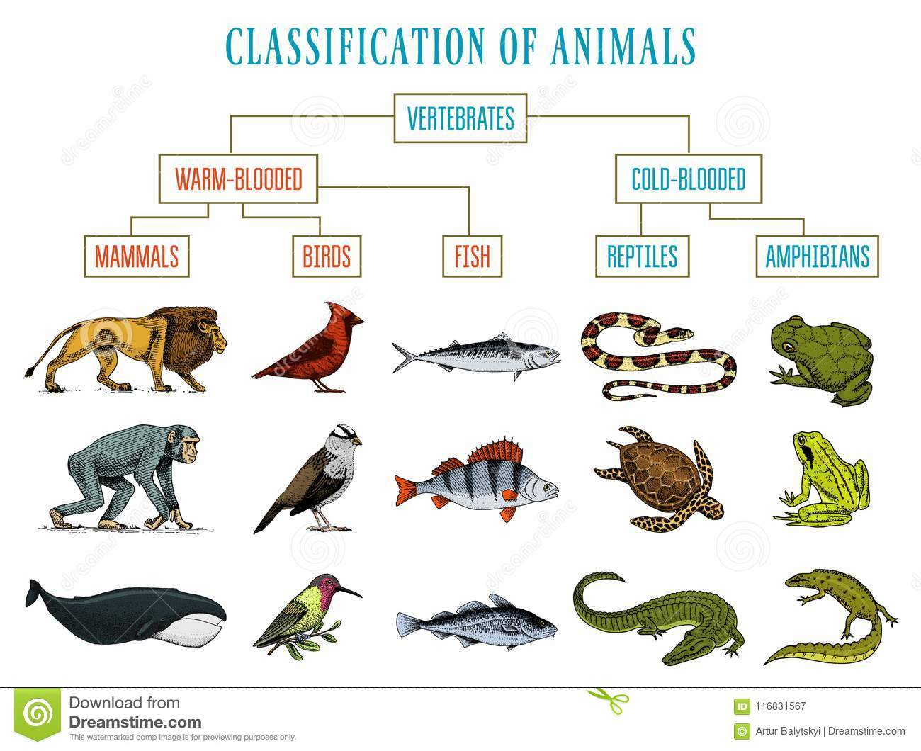 Classification Of Animals Reptiles Amphibians Mammals Birds Crocodile Fish Lion Whale Snake