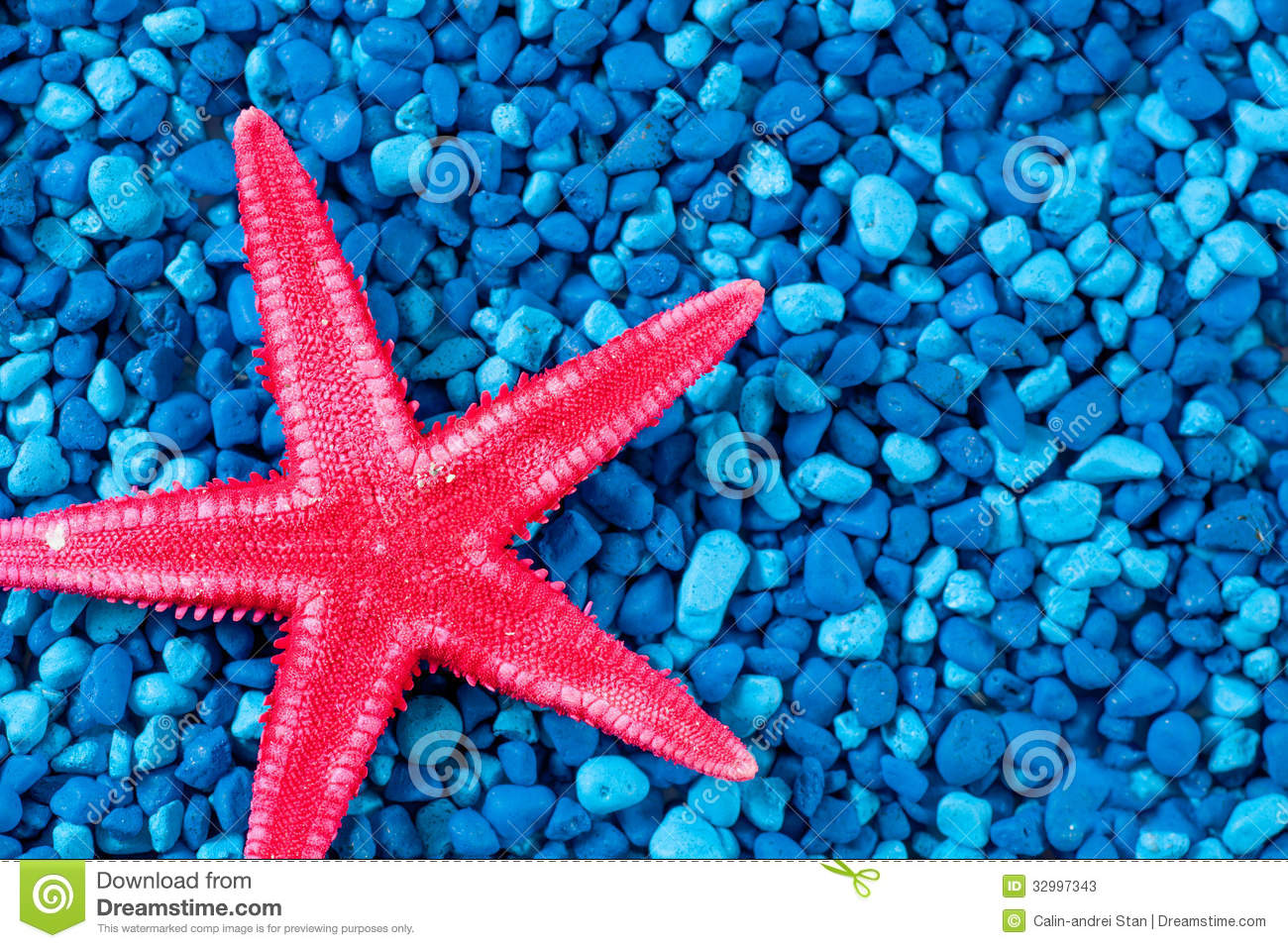 Seahorse Hd Wallpaper Close Up Red Starfish On Blue Background Stock Image
