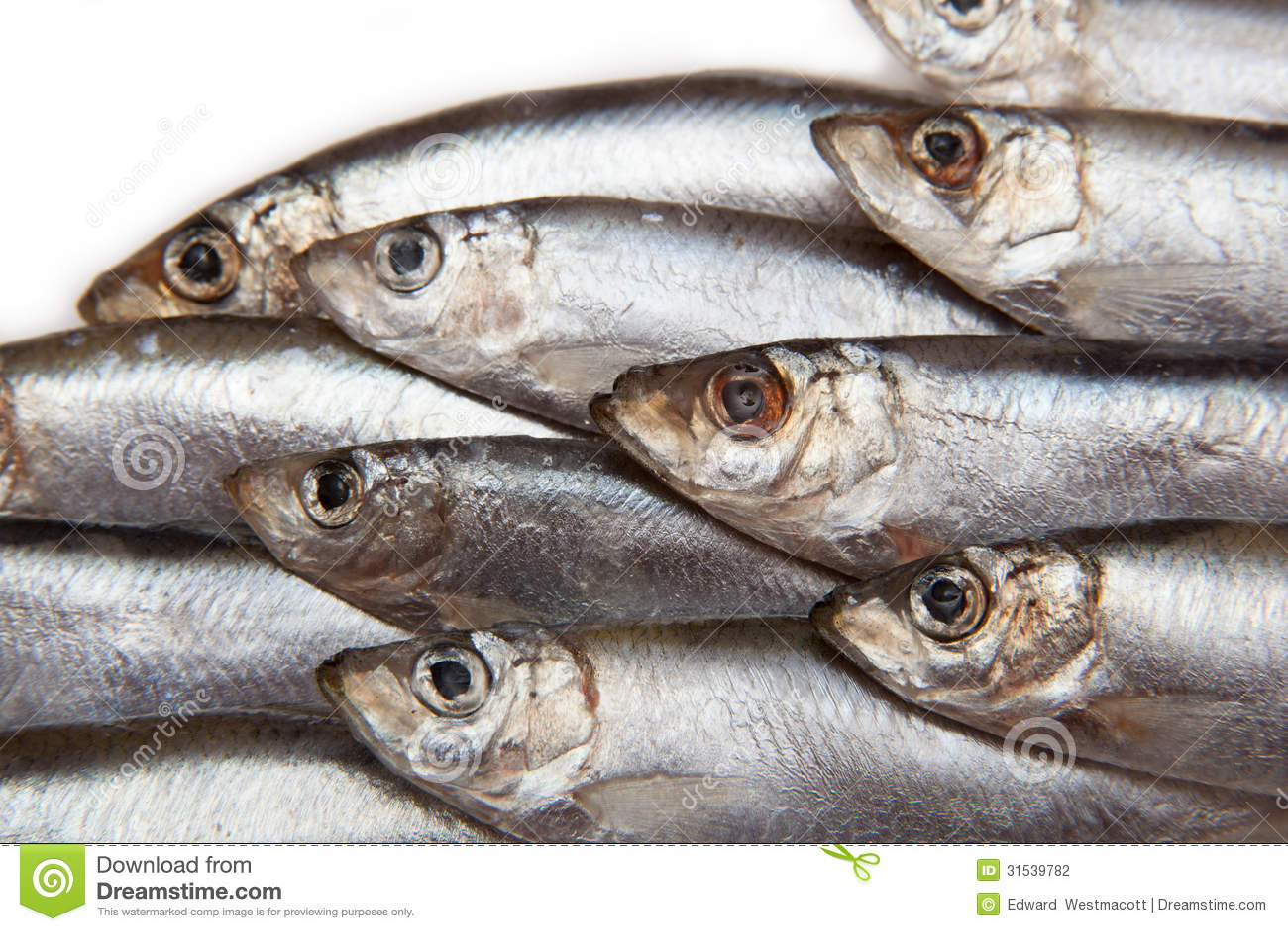 Closeup of Sprat fish stock photo. Image of aquatic. detail - 31539782
