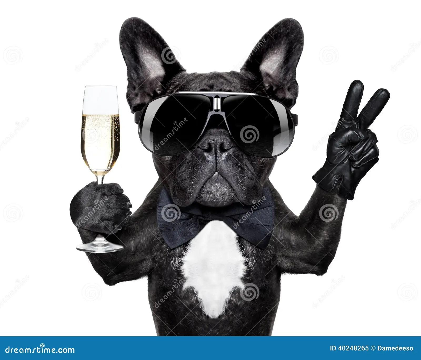 Cocktail Dog Stock Photo Image 40248265