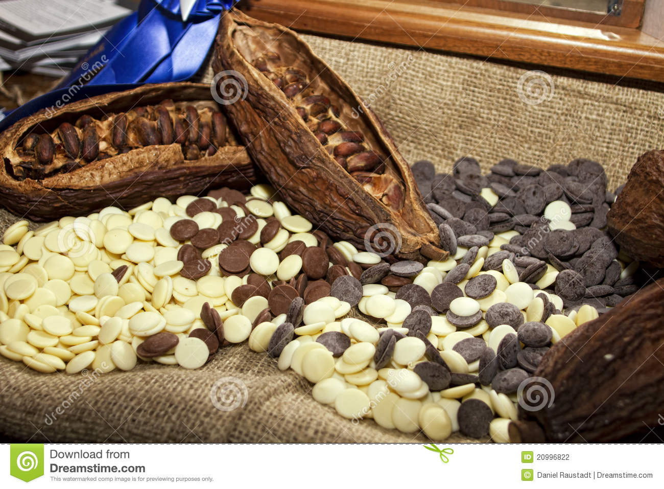 healthy food diagram 1995 ford taurus wiring cocoa beans with white and dark chocolate stock photography - image: 20996822