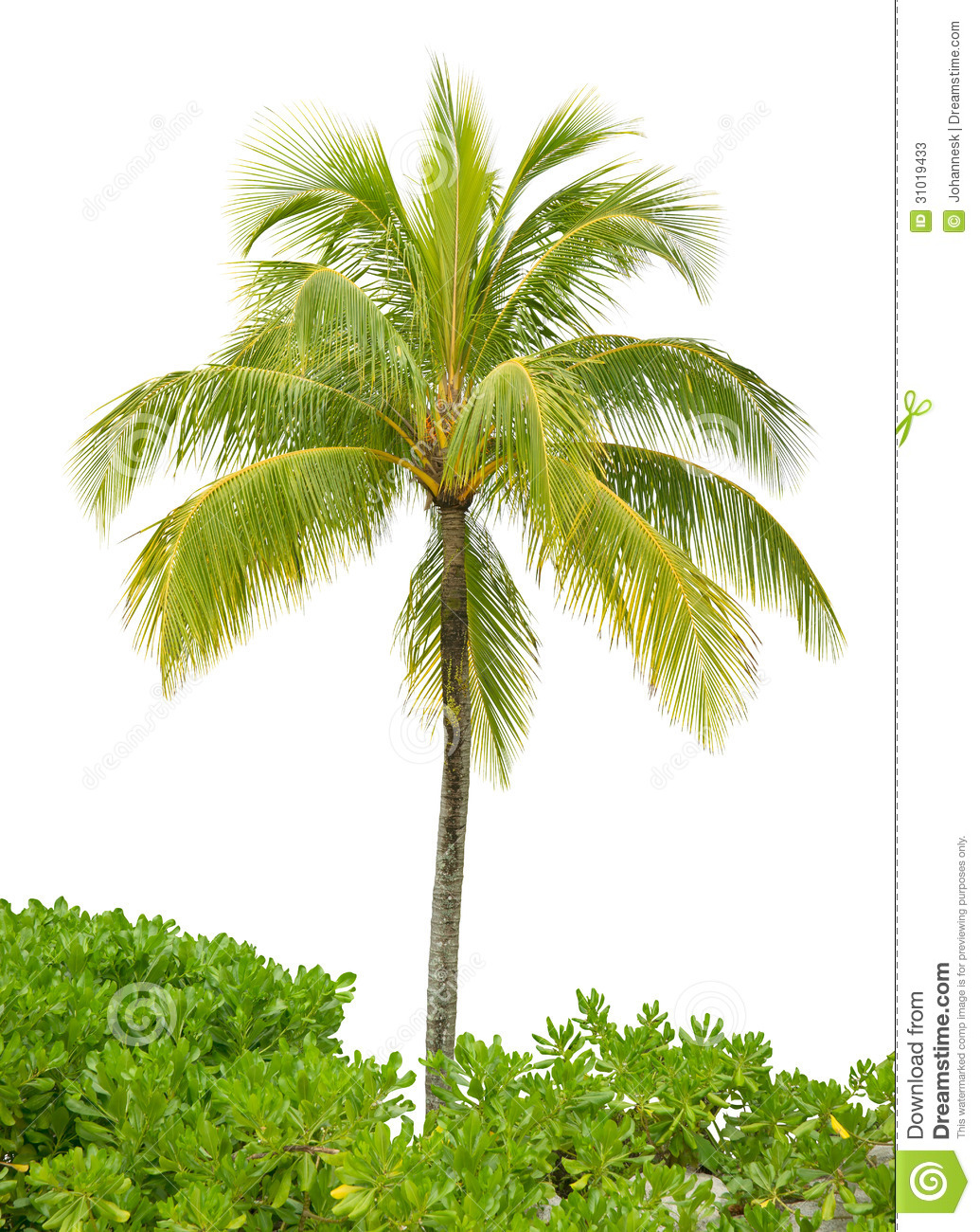 Designs Of Coconut Trees