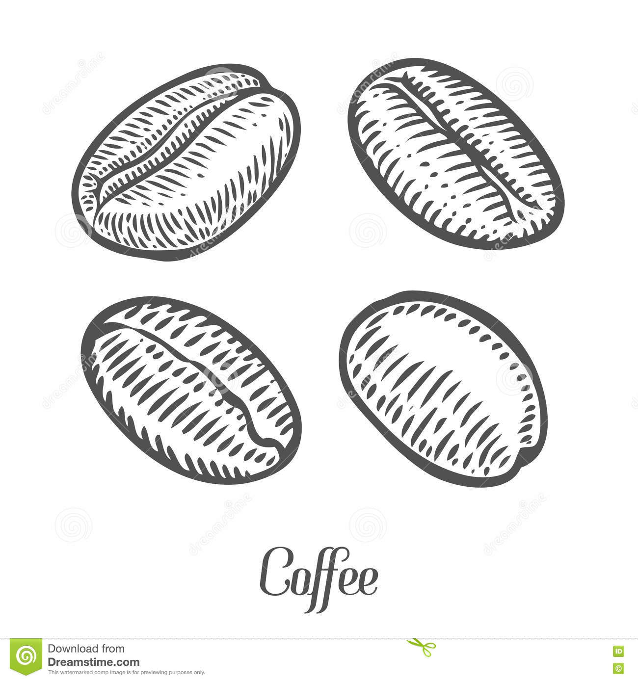 Coffee Beans Berry Fruit Seed Natural Organic Caffeine