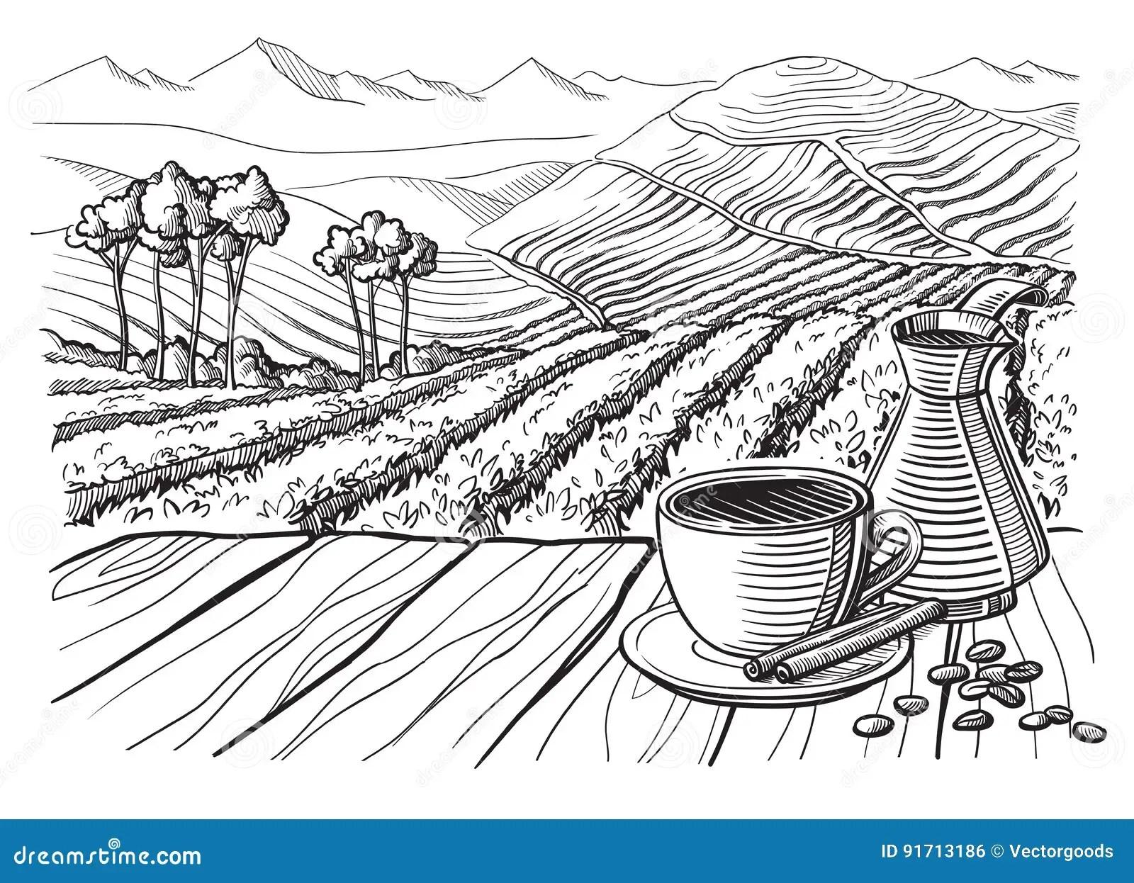 Coffee Plantation Landscape Vector Illustration