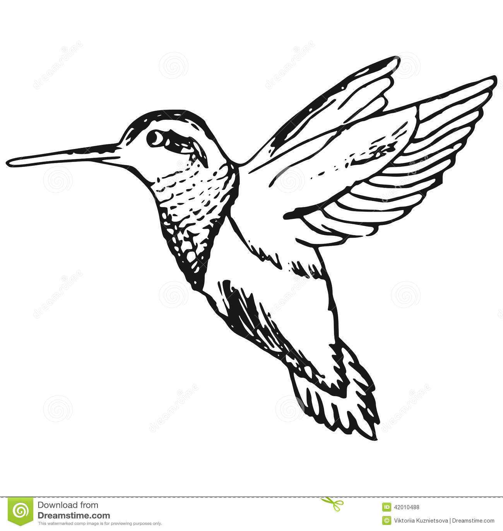 Colibri Stock Vector Illustration Of Pigeon Hummingbird
