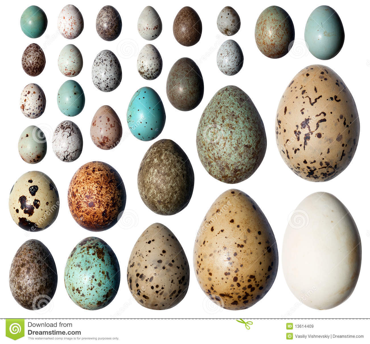 Collection Of The Bird S Eggs Stock Image