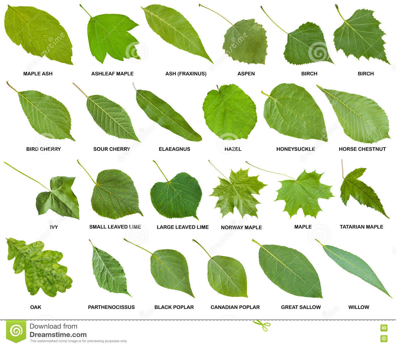 collection of green leaves