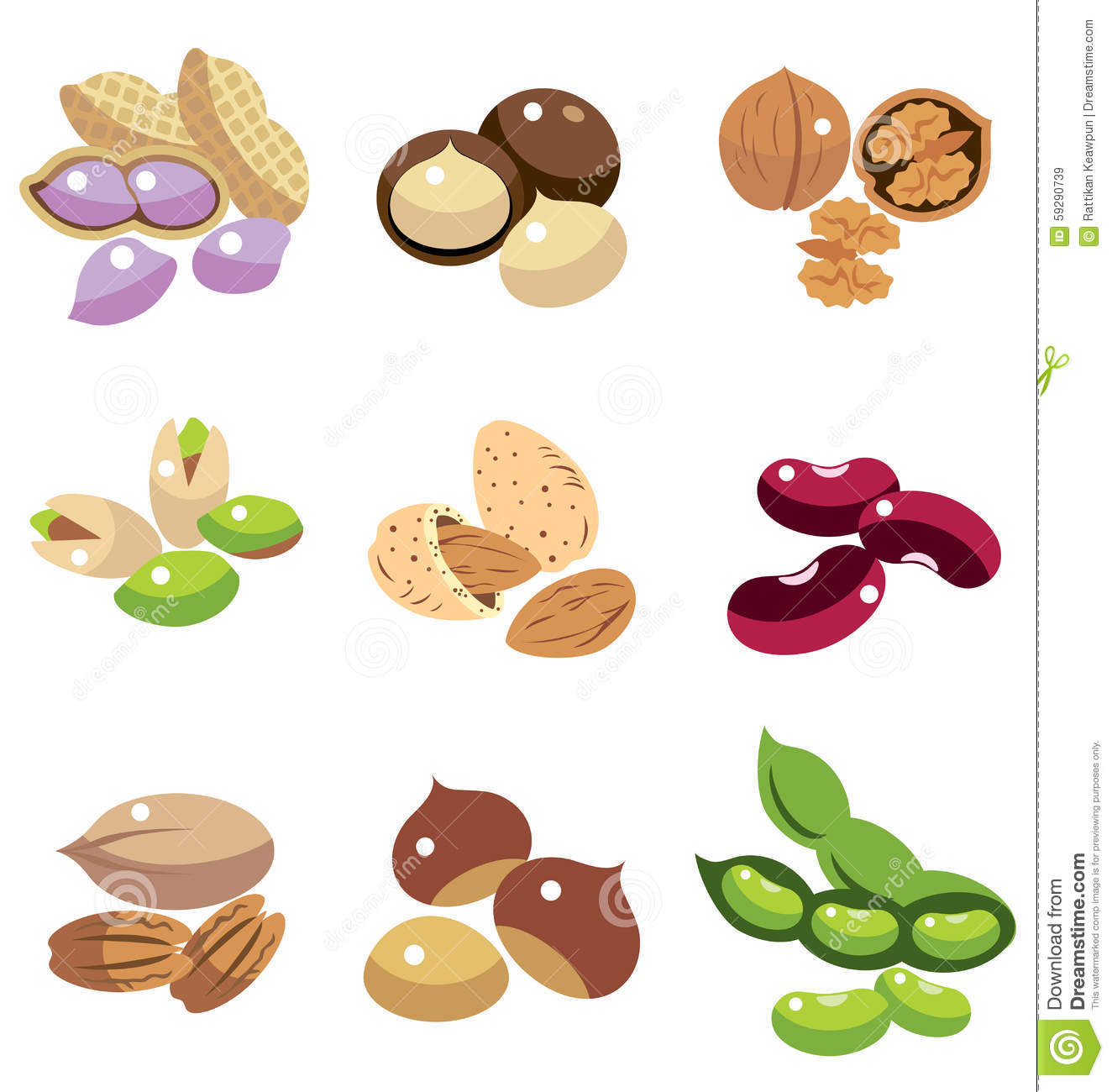 Collection Of Nuts And Beans Stock Vector