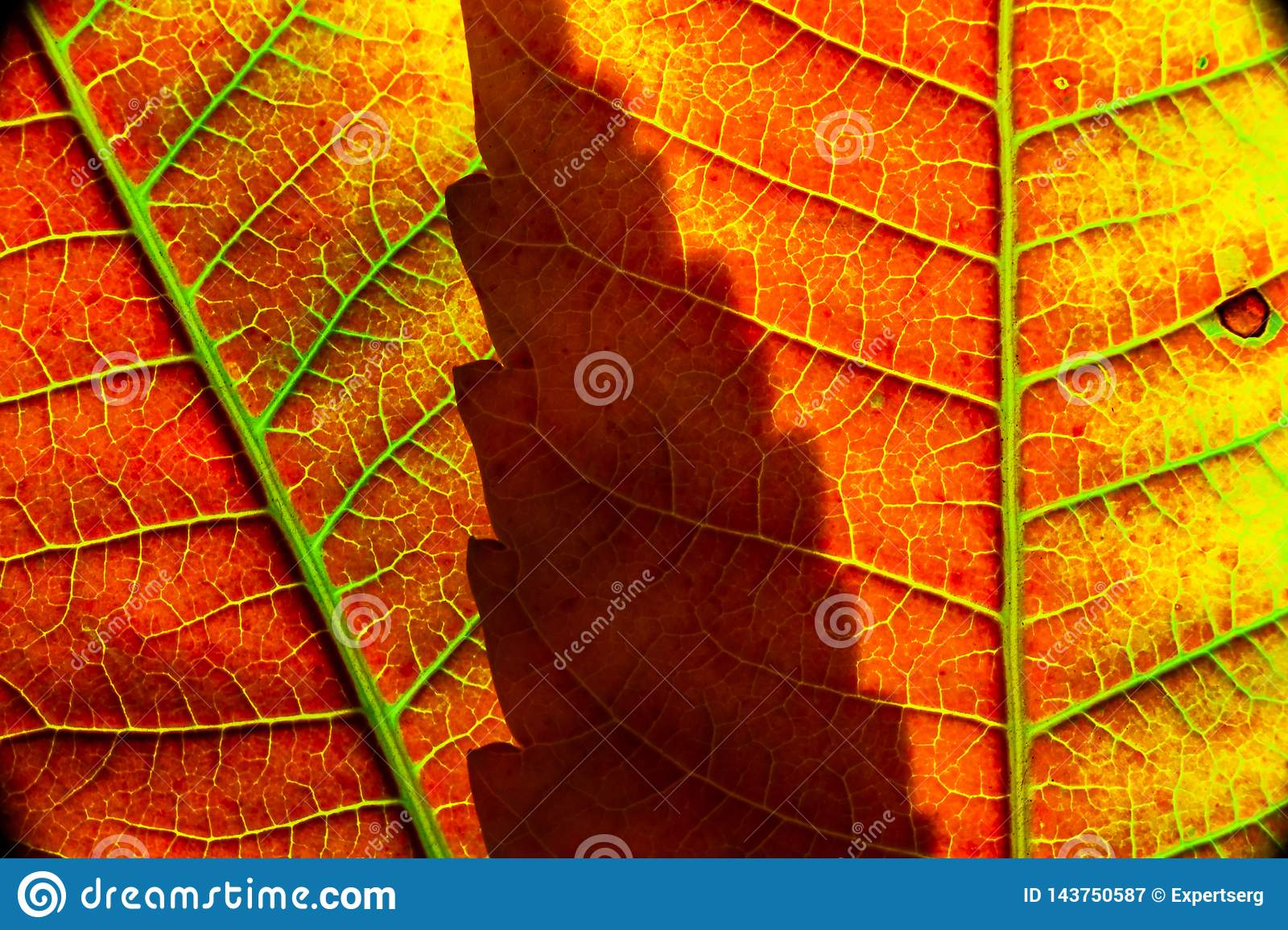 Color Autumn Leaf Green Red Orange Yellow Macro Stock