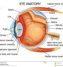color illustration of the anatomy of the human eye and related structures right eye from above [ 1300 x 1063 Pixel ]